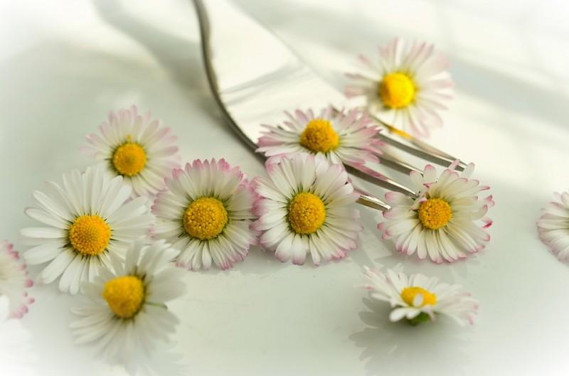 daisy-755517_960_720