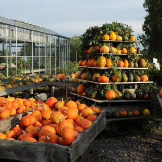 pumpkin-985143_1280